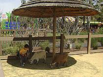 Ziegen im Streichelgehege des Happy Hollow Park and Zoo. © Oleg Alexandrov