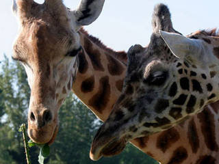 Greater Vancouver Zoo © Greater Vancouver Zoo