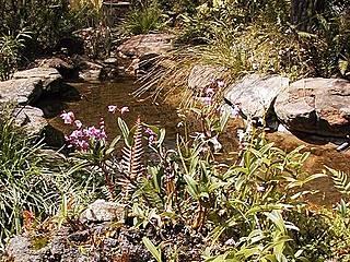 Glenbrook Native Plant Reserve  © Casliber