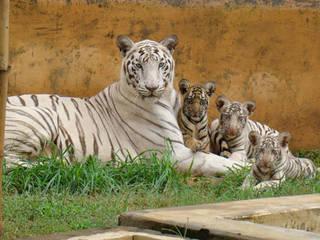 Nandankanan Zoological Park © Nandankanan Zoological Park