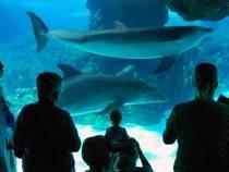 Parkübersicht: SeaWorld Orlando