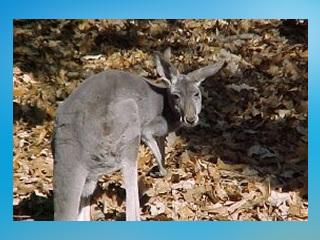 Louisiana Purchase Gardens And Zoo Tierpark In Monroe